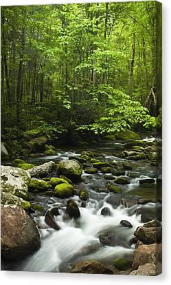 Smoky Mountain Stream Canvas Print by Andrew Soundarajan