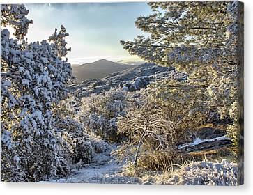 Snow At Sunrise 3 Canvas Print