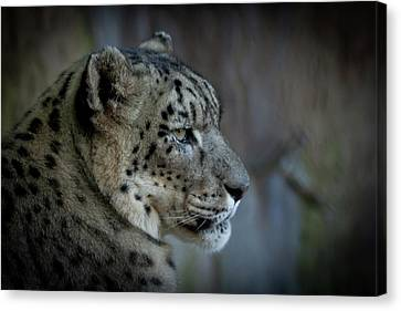 Canvas Print featuring the photograph Snow Leopard by Roger Mullenhour