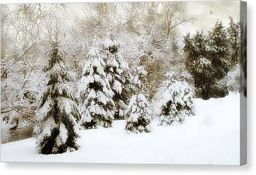 Snow Pines Canvas Print by Jessica Jenney