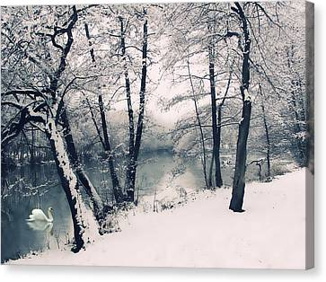 Swans... Canvas Print - Snow Pond by Jessica Jenney