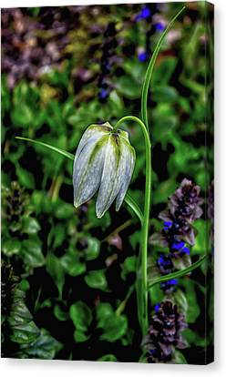 Snowdrop Canvas Print by Martin Newman
