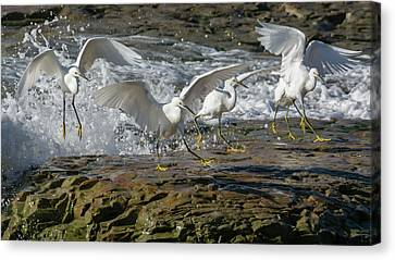 Snowy Egrets In The Surf Canvas Print by Bruce Frye
