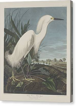 Heron Canvas Print - Snowy Heron Or White Egret by Dreyer Wildlife Print Collections