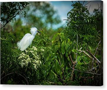 Wetland Canvas Print - Snowy by Marvin Spates