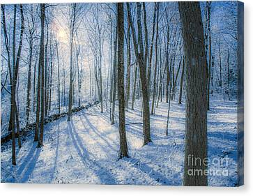 Snowy New England Forest Canvas Print by Diane Diederich