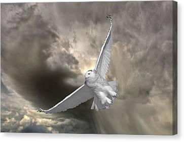 Profile Canvas Print - Snowy Owl In Flight by Mark Duffy