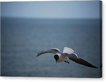 Canvas Print featuring the photograph Soaring by Debbie Karnes