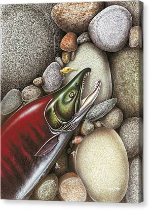 Sockeye Salmon Canvas Print by JQ Licensing
