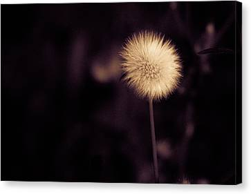 Canvas Print featuring the photograph Tuft by Lora Lee Chapman