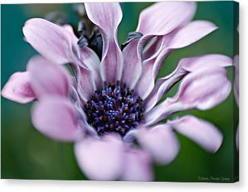 Soft Purple Canvas Print by Michaela Preston