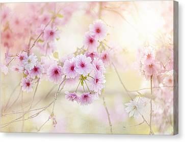 Softness Canvas Print by Jacky Parker