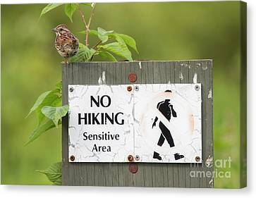 Sparrow Canvas Print by Jeannette Hunt