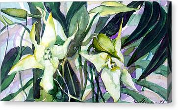 Spider Orchids Canvas Print by Mindy Newman