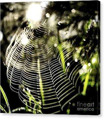 Spider's Web. Canvas Print