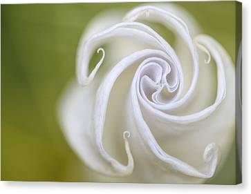 Pastel Canvas Print - Spiral by Nailia Schwarz