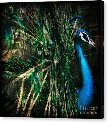Splendour Canvas Print by Andrew Paranavitana