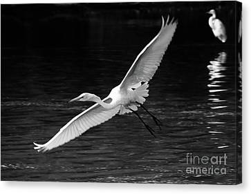 Spread Your Wings Canvas Print