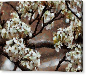 Canvas Print - Spring Blossoms by Ann Powell
