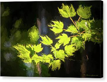 Spring Color Canvas Print by Marvin Spates