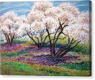 Spring Has Sprung Canvas Print by Art Nomad Sandra  Hansen