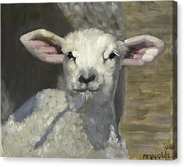 Spring Lamb Canvas Print by John Reynolds
