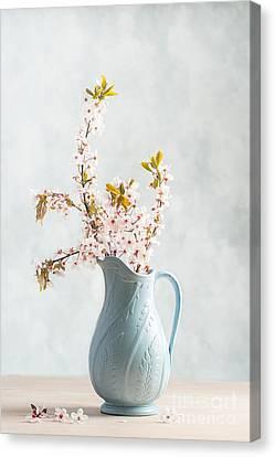 Springtime Blossom Canvas Print by Amanda Elwell