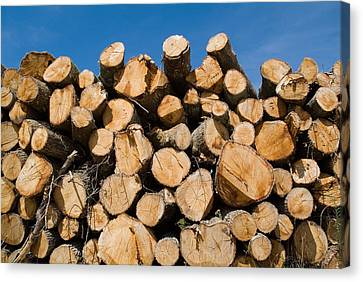 Stack Of Wooden Logs In The Landes Forest Canvas Print by Sami Sarkis