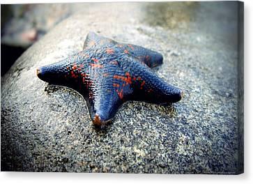 Starfish Canvas Print - Starfish by Shania Torn