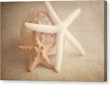 Seashell Canvas Print - Starfish Still Life by Tom Mc Nemar