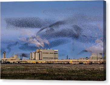 Starling Mumuration Canvas Print