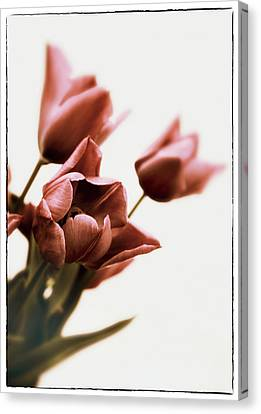 Canvas Print featuring the photograph Still Life Tulips by Jessica Jenney