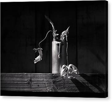 Still Life With Tulip Canvas Print by Nailia Schwarz