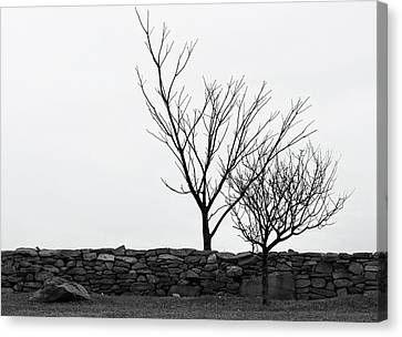 Stone Wall With Trees In Winter Canvas Print