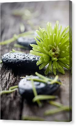 Stones With Water Drops Canvas Print