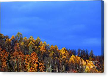 Stormy Sky Last Fall Color Canvas Print by Thomas R Fletcher