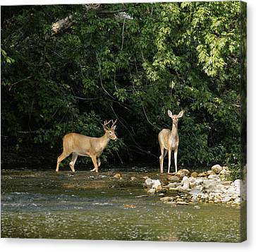 David Lester Canvas Print - Stream Crossing by David Lester