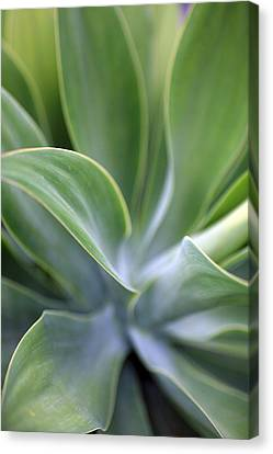 Succulent Curves Canvas Print