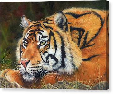 Tiger Canvas Print - Sumatran Tiger  by David Stribbling