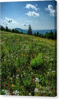 Summer Flowers Highland Scenic Highway Canvas Print