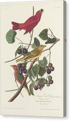 Summer Red Bird Canvas Print