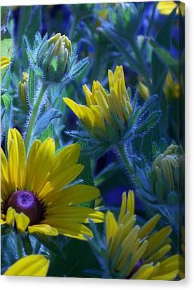 Sun Glory Series Canvas Print
