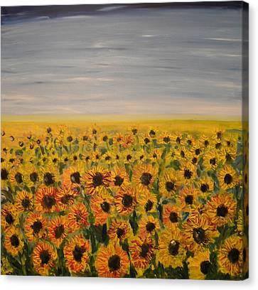 Sunflower Field Canvas Print by Carmen Kolcsar