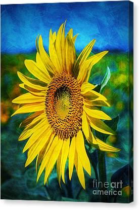 Canvas Print featuring the digital art Sunflower by Ian Mitchell