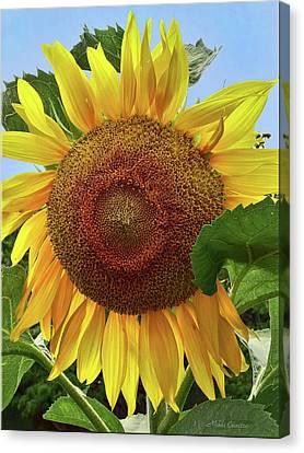 Sunflower Canvas Print by Mikki Cucuzzo