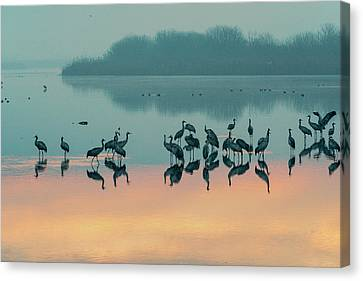 Sunrise Over The Hula Valley Canvas Print