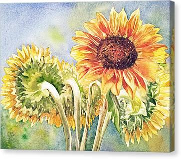 Suns All Around Canvas Print