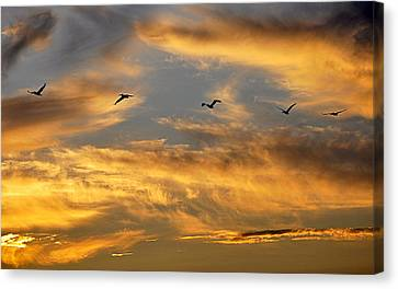 Canvas Print featuring the photograph Sunset Flight by AJ Schibig