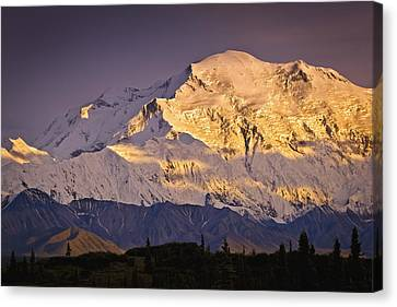 Sunset Glow On Mt. Mckinley, Denali Canvas Print by Sunny Awazuhara- Reed