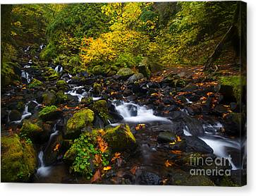 Surrounded By Autumn Canvas Print by Mike Dawson